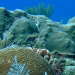 Research Uncovers How Some Coral Can Survive Annual Bleaching Events