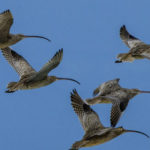 World failing to protect its migratory birds