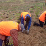 New partnership to enrich 'green infrastructure' in New Zealand