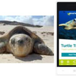 Saving endangered sea turtles? There's an app for that.