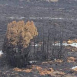 Climate change to blame for destruction of ancient forests in Tasmania
