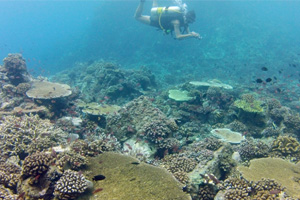 UN Environment Programme and Partners Launch Sustainable Diving Guide to Protect Marine Assets