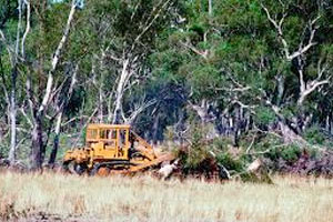 UN targets Australia over tree-clearing emissions Tree-clearing